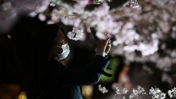 Sakura di Tokyo Jepang