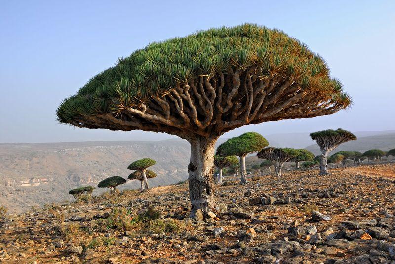 Pulau Socotra masuk dalam wilayah negara Yaman, berjarak 250 km dari lepas pantainya dan dekat dengan Benua Afrika (iStock)