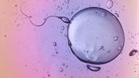 Selama Ini Cuma Ilusi Optik,  Ternyata Begini Cara Sperma Berenang