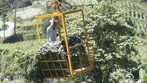 Inovatif, Petani Suntenjaya Lembang Angkut Sayuran Pakai Gondola