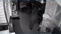 Bukan Manusia, Restoran dan Supermarket Ini Justru Dikunjungi Hewan