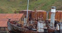 Tempat Terpencil Bumi yang Jadi Lokasi Pembantaian Mamalia Laut
