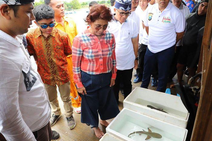 Susi juga melakukan pelepasan hiu yang sudah diobati di klinik ke perairan lepas. Istimewa/Kementerian Kelautan dan Perikanan.