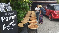 Usai Berwisata ke Candi PawonBisa Nyeruput Kopi Luwak di Kafe Ini