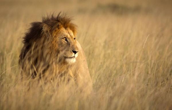 Untuk menjadi prajurit tersebut, mereka harus berburu singa! (iStock)
