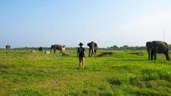 Taman Nasional Ditutup, Gajah-gajah Way Kambas Nikmati Ketenangan