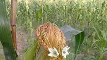 Kreatif! Rambut Jagung Ini Ditata Cantik Seperti Rambut Manusia