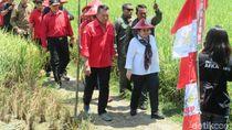 Panen Padi di Indramayu, Megawati Ajak Generasi Muda Garap Sawah