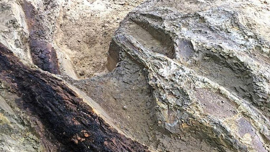 Para Ahli Pertanyakan Temuan Makam Terbesar Dinosaurus