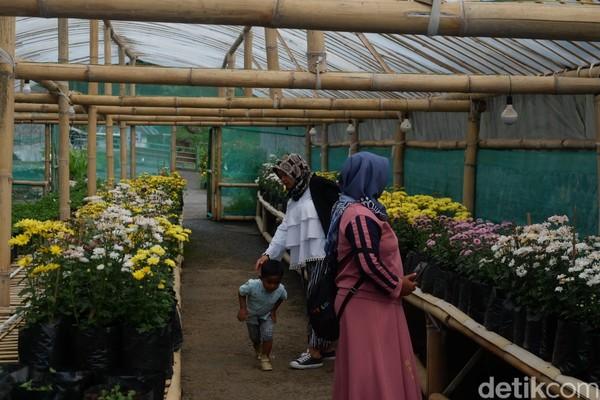 Wonoland menyuguhkan wisata edukasi dengan berbagai jenis bunga dan satwa. Sedikitnya, ada 30 jenis bunga dengan berbagai warna. Misalnya, bunga krisan, matahari, kertas dan jenis bunga lainnya. (Uje Hartono/detikcom)