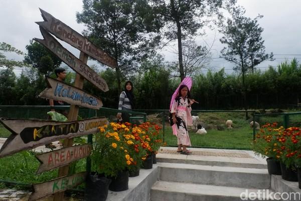 Taman bunga yang berada di di Desa Andongsili, Kecamatan Mojotengah, ini selalu ramai dikunjungi wisatawan. (Uje Hartono/detikcom)