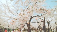 Liburan ke Jepang di Bulan Juli Akan Bertabur Diskon