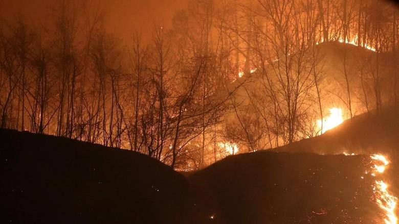 Ganasnya Kebakaran Hutan di Korsel yang Bikin 4 Ribu Orang Mengungsi