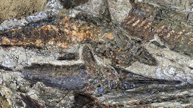 'Temuan Abad Ini' Ungkap Kejadian Saat Dinosaurus Punah?