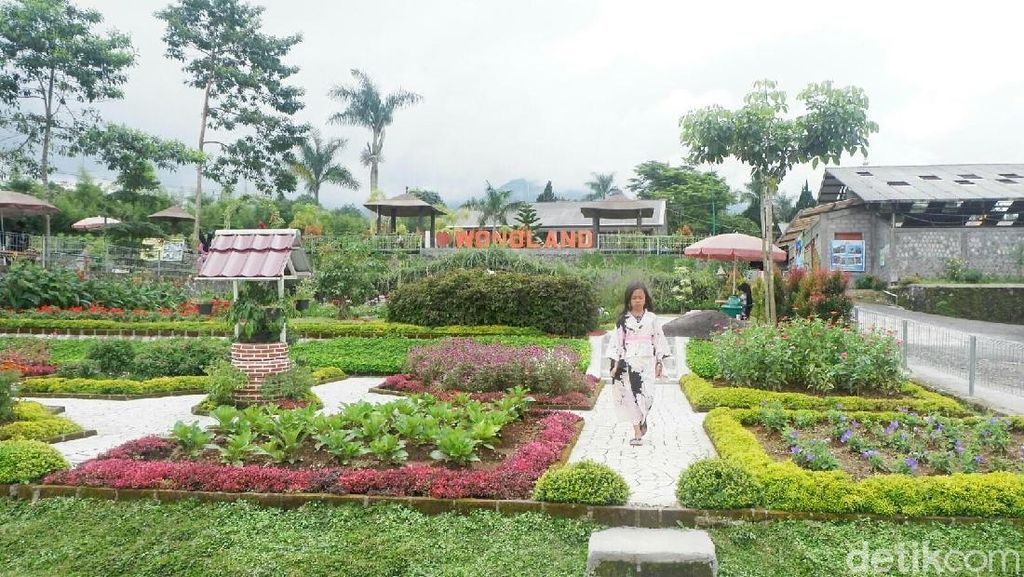 Foto: Seperti Ini Taman Bunga Instagramble di Wonosobo