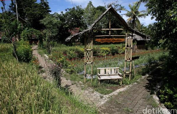 Memasuki gerbang desa, kita sudah disambut oleh atmosfir desa yang masih terjaga. Di kiri kanan jalan banyak kita jumpai kedai-kedai kopi yang menyajikan kopi khas Kemiren, Kopi Osing. (Rachman Haryanto/detikcom)