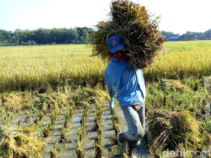 Buruh Tani Ini Ingin Punya Tangan Palsu Agar Bisa Salaman Pas Lebaran