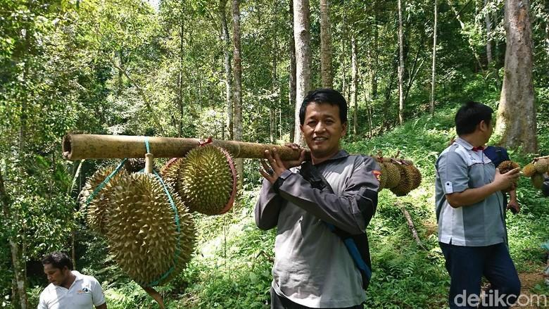 Wisata jelajah hutan di Trenggalek (Adhar Muttaqin/detikcom)