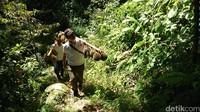 Pengunjung diajak menyusuri hutan International Durio Forestry (IDF). Program ini memiliki fungsi wisata sekaligus edukasi agar lebih mencintai hutan (Adhar Muttaqin/detikcom)