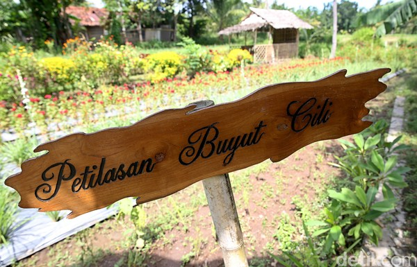 Kamu sudah pernah ke Osing, Banyuwangi belum? (Rachman Haryanto/detikcom)