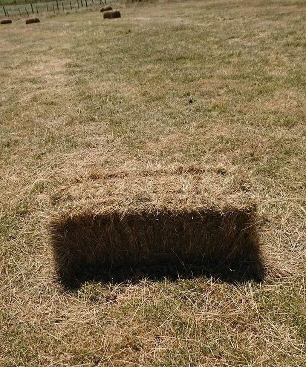 Foto yang jadi perdebatan, rumput ini berlubang atau hanya sebuah bayangan hitam saja/? (Foto: Brightside)