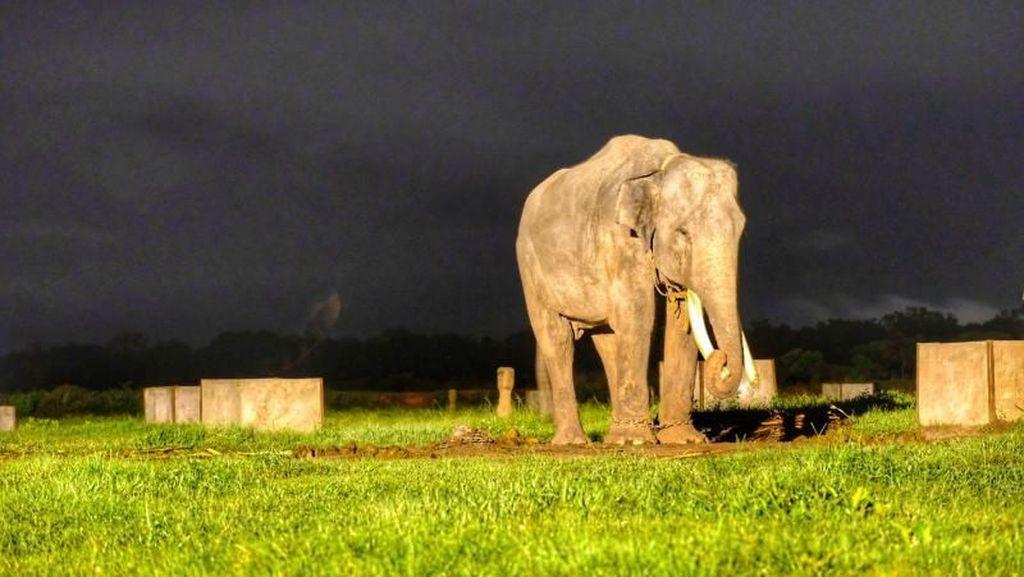 Sehari Bersama Gajah-Gajah Way Kambas