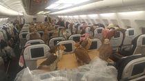 Duduk Sebelah Penumpang yang Bawa Elang di Pesawat, Apa Rasanya?