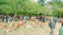 Taman Nara Jepang Kini Punya Kantong Ramah Rusa, Seperti Apa?