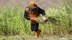 Mesin Rusak, Petugas UPK Badan Air Potong Rumput Menggunakan Arit