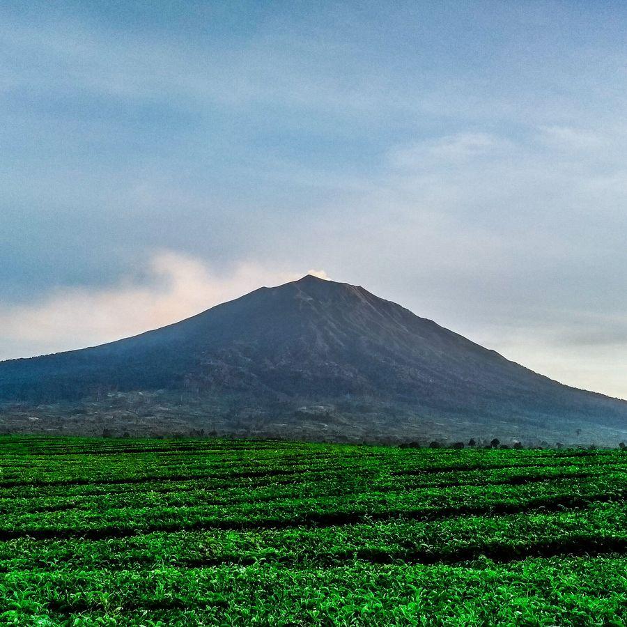 Jokowi yang aktif sebagai Mahasiswa Pencinta Alam (Mapala) Silvagama Universitas Gadjah Mada (UGM) mendaki Gunung Kerinci tahun 1983. Ia bersama rombongan 14 orang, dan menjadi orang pertama dari para rombongan pendaki Silvagama yang mencapai puncak (iStock)