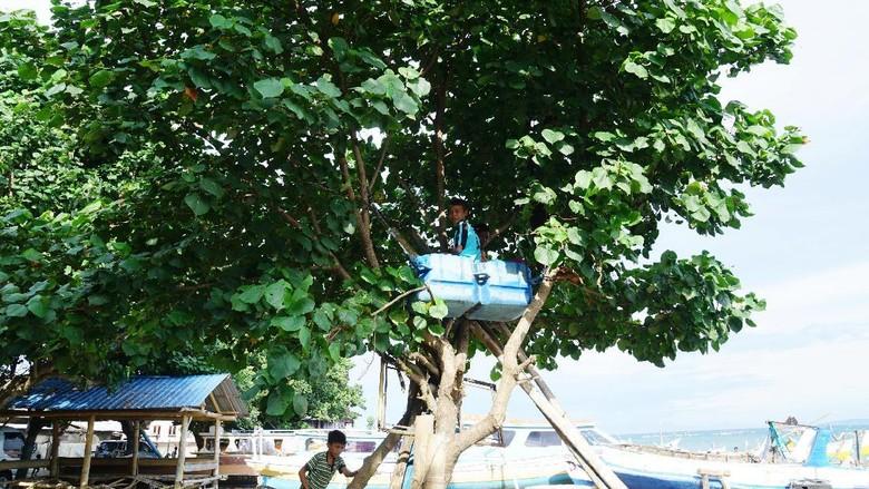 Rumah pohon ala anak-anak Lombok (Syanti Mustika/detikcom)