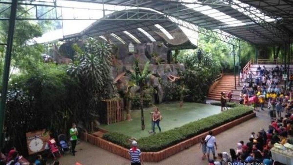 6 Show Wajib Saat Plesir ke Taman Safari II Prigen