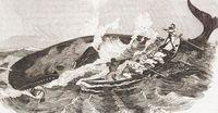 Perburuan paus di sekitar Pulau Mocha (BBC Travel)