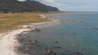 Pulau Mocha di Chile (BBC Travle)