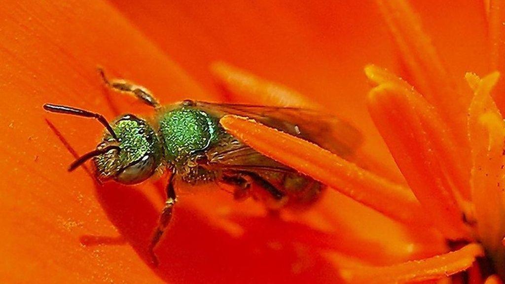 Kekagetan Dokter Temukan 4 Lebah Hidup di dalam Mata Perempuan