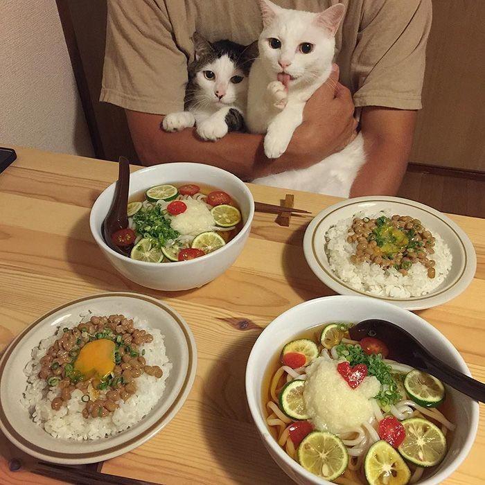 Lewat akun Instagram @naomiuno, pasangan asal Jepang ini membagikan momen imut dan menggemaskan ketika dua kucing peliharaan mereka, ikut makan di meja makan. Foto: Istimewa