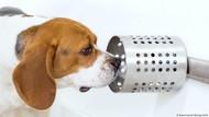 Ternyata! Anjing Pendeteksi Penyakit Kanker yang Luar Biasa