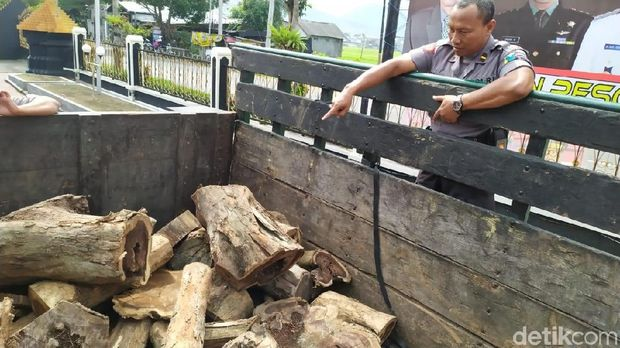 Barang bukti kayu sonokeling yang diamankan