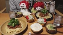 Pasangan Ini Abadikan Momen Imut Kucingnya Saat Makan Enak