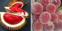 Keren! Kolektor Ini Punya Durian Botak hingga Durian Kura-kura di Kebunnya