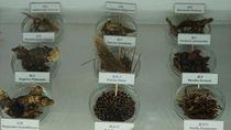 Melihat Museum Teh Herbal di Negeri Jiran