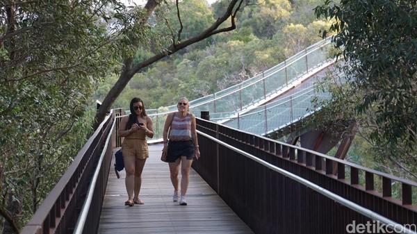 Jembatan pejalan kaki melengkung dari baja dan kaca di Botanical Garden. Menggantung 52 meter di atas permukaan tanah, jembatan ini ada di atas pohon (Ahmad Masaul Khoiri/detikcom)