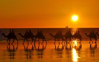 Naik unta di Broome (Summer Day)