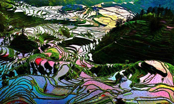 Sawah Yuanyang di China, wilayah ini merupakan tempat tinggal suku Hami dan Yi, mereka menciptakan jajaran sawah bertingkat yang monumental dan telah membuat daerah itu terkenal. Istimewa/easemytrip.com.