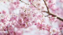 Ini 10 Hal yang Bikin Kamu Kangen Liburan ke Jepang