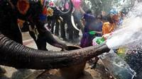 Tak hanya manusia yang ikut dalam main basah-basahan di Festival Songkran. Gajah-gajah pun akan meramaikan festival ini dengan menyiramkan air ke orang-orang. (Reuters)