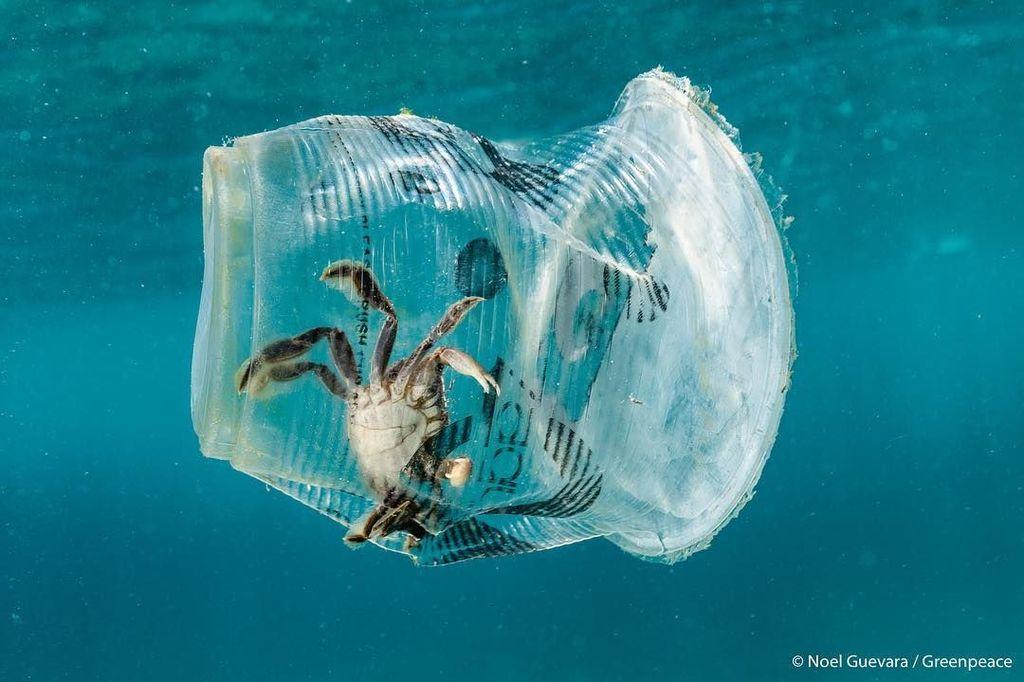Sampah plastik minuman membuat kepiting ini terjebak di dalamnya. Foto ini diambil di Teluk Batangas, Filipina.(Foto: Brightside)