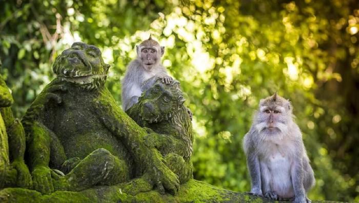 Ilustrasi monyet di Ubud