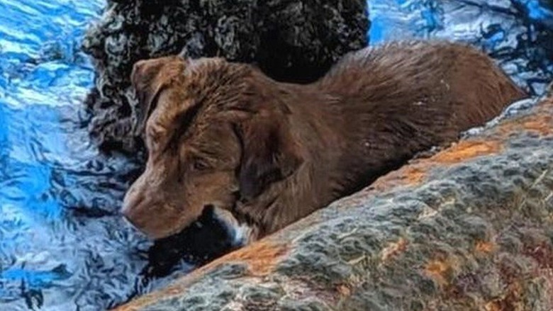 Anjing yang Terombang-ambing di Tengah Laut, Berhasil Diselamatkan