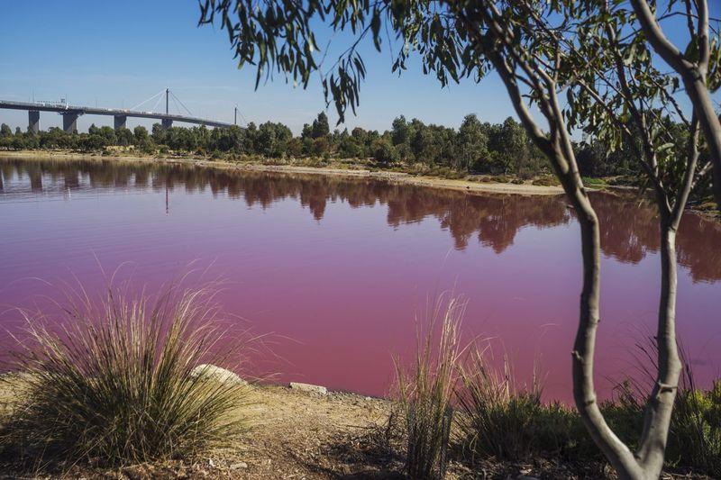 Danau pink tersebut berada di dekat kawasan Westgate Park. Cuma 7 km jaraknya dari pusat Kota Melbourne (iStock)